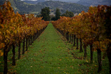 Main_thumb_winery