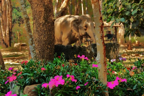 Full_dsc_0242_flowers___elephant_muted