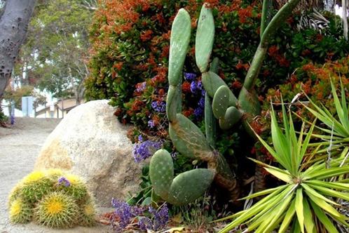 Full_desert_garden