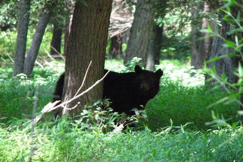 Full_bear2