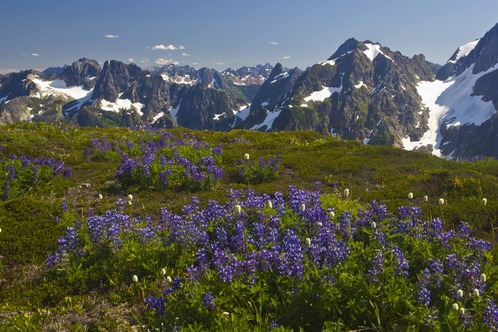 Full_sahale_trail_with_flowers_6em