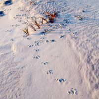 Main_footprints